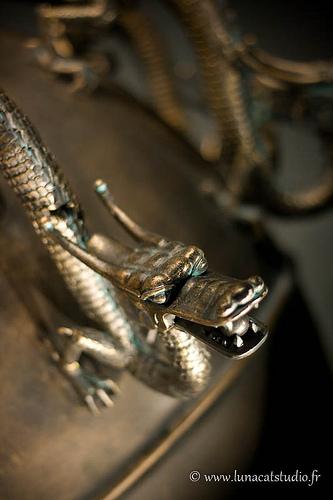 Dragon du muséum d'histoire naturelle de Toulouse
