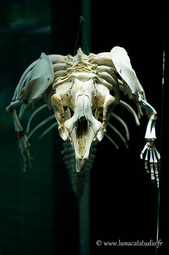 Squelette du muséum d'histoire naturelle de Toulouse