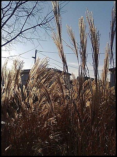 Photo 52 hiver
