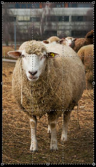 Photographie animalière règle des tiers