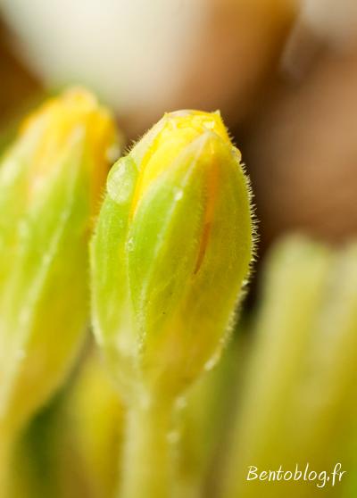 Photo printemps bourgeon