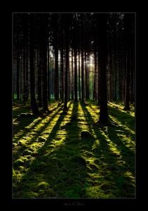 Utiliser la lumière en photographie