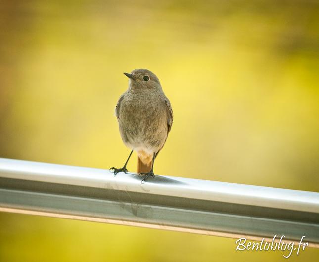 Photo Croissance Oiseau