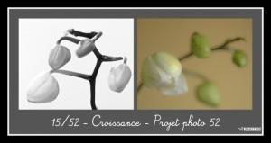 Projet Photo 52 Croissance