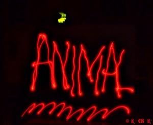 Projet photo 52 animal
