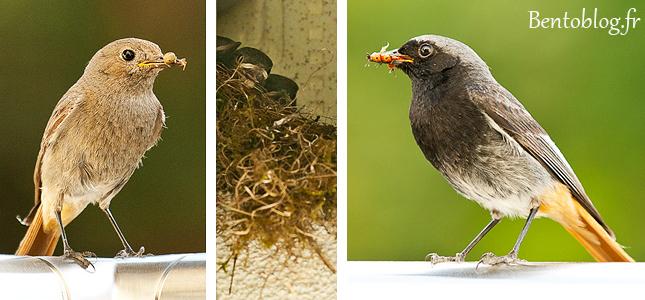 Projet photo 52 quotidien oiseau