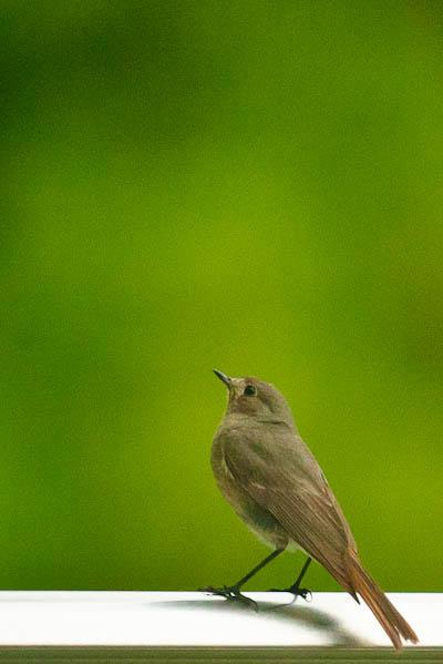 Oiseau sur le départ