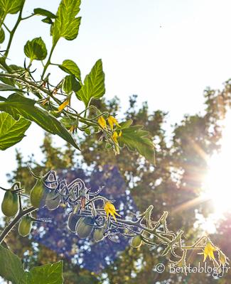 Projet photo 52 soleil