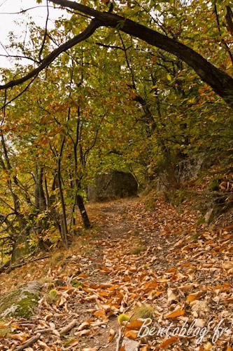 Projet photo 52 automne