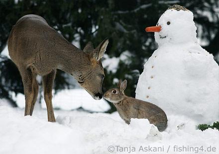 Bambi Panpan